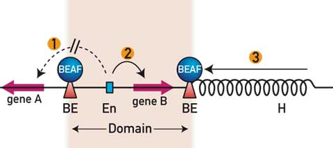 Figure 1. Some properties of boundary elements (BEs) are depicted.